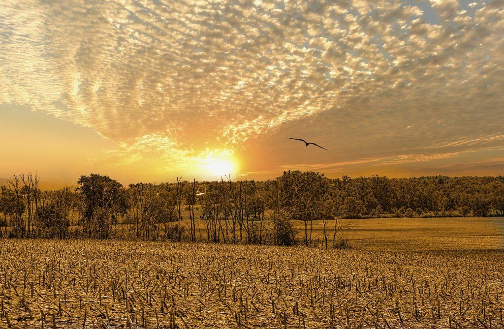 scenery, sunrise, trees